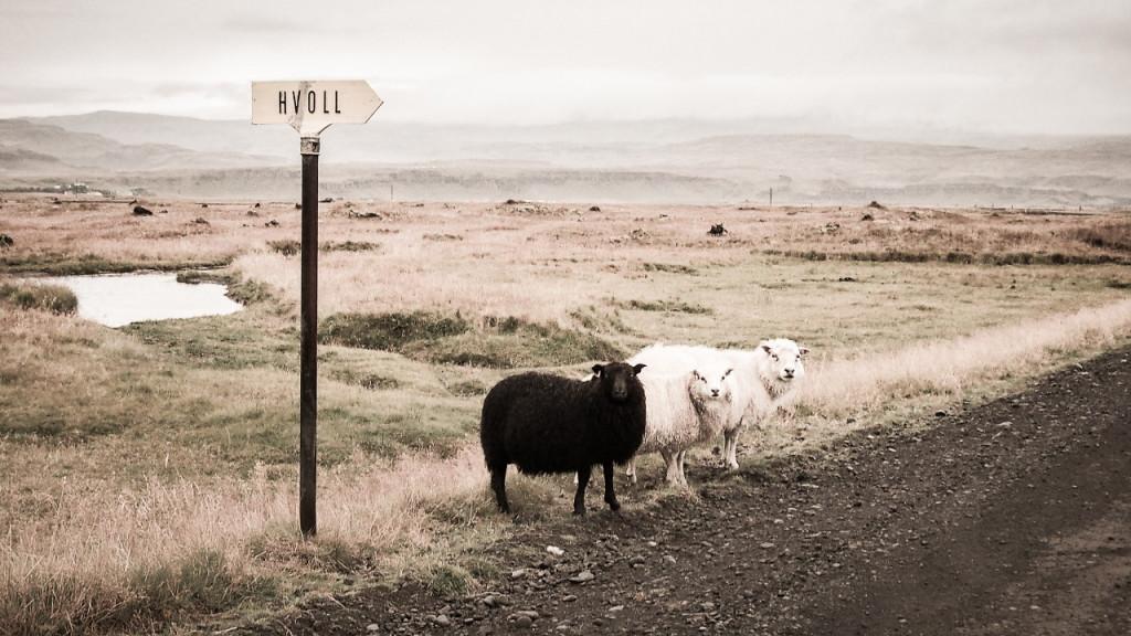 Sommes-nous des moutons condamnés à voir passer impuissants le train de la hype ?