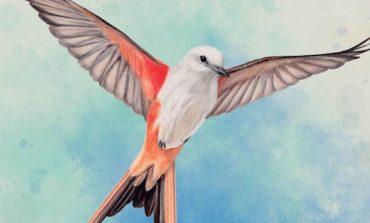 Wingspan : L'envergure d'un grand jeu