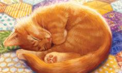 Calico : Quand les chats ronronnent, les neurones chauffent